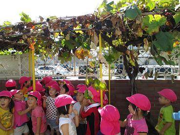 幼稚園のぶどう畑。